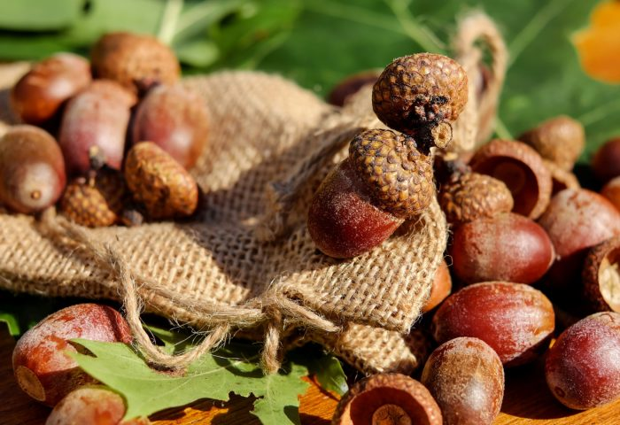 acorns_bag_nuts-1920x1080