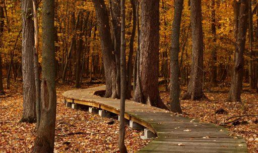 autumn_foliage_park_trees-1920x1080