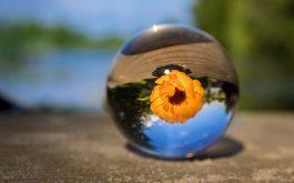 ball_flower_glass_blurring-1920x1080