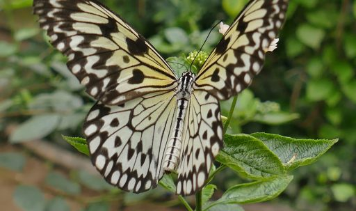 butterfly_wings_patterns_plant-1920x1080