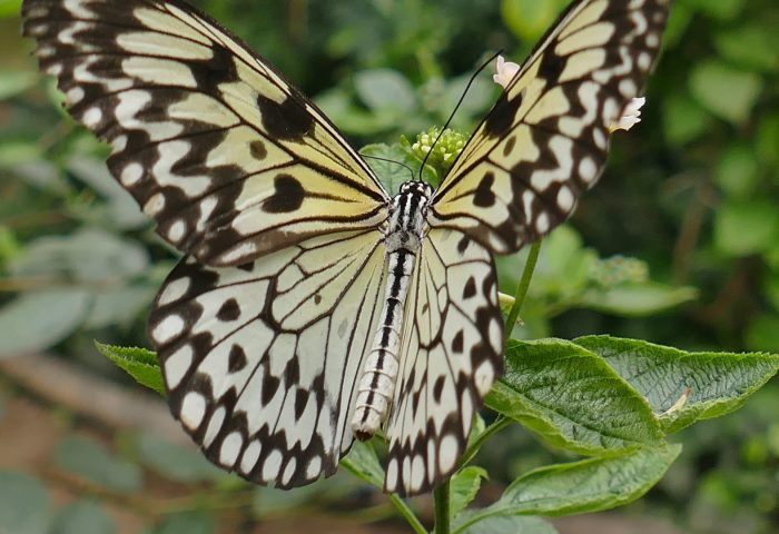 butterfly_wings_patterns_plant-1920x1080
