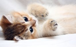 cat_kitten_cute_foot_face-1920x1080