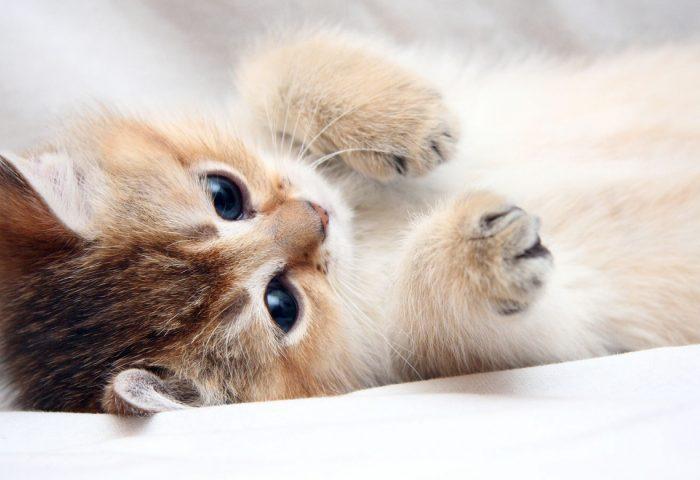 cat_kitten_cute_foot_face-1920x1080