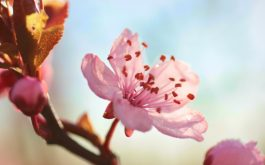 flower_bloom_branch_spring-1920x1080