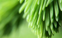 plant_branch_close_up_blurred-1920x1080