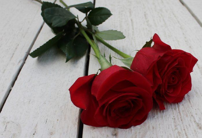 rose_couple_flowers_stem_bud-1920x1080