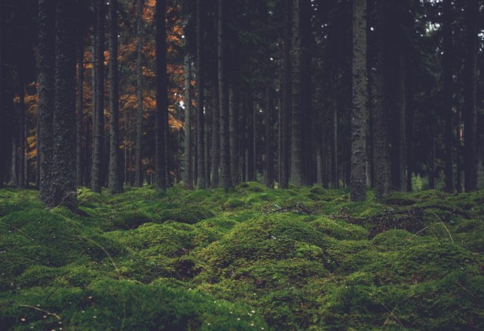moss_trees_forest-1920x1080